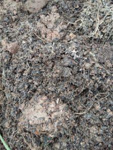Trộn đất với mùn