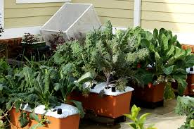 Mô hình trồng rau