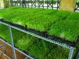 Mô hình trồng rau sân thượng