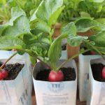 Cách chăm sóc rau mùa lạnh không phải ai cũng biết