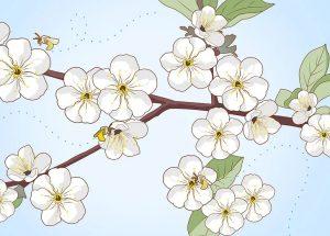 Aid1363010 V4 728px Plant Cherry Seeds Step 22 Version 2.jpg (1)