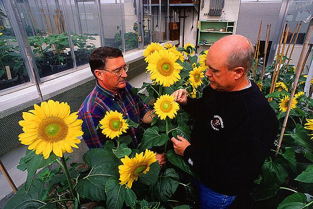 Sunflowerscientists