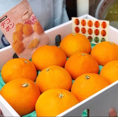 Những trái cam Nhật rất to tròn và bắt mắt