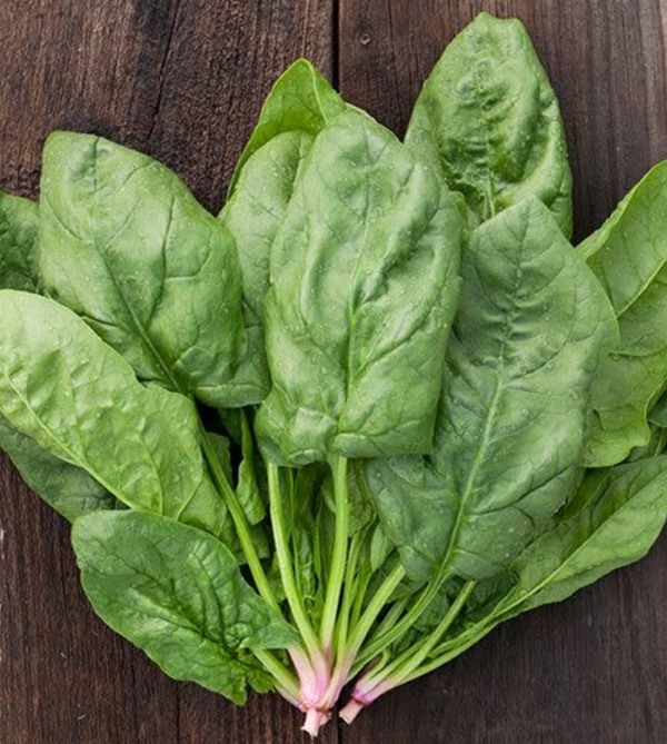 Hm Renegade F1 Spinach 100 Seeds (1)
