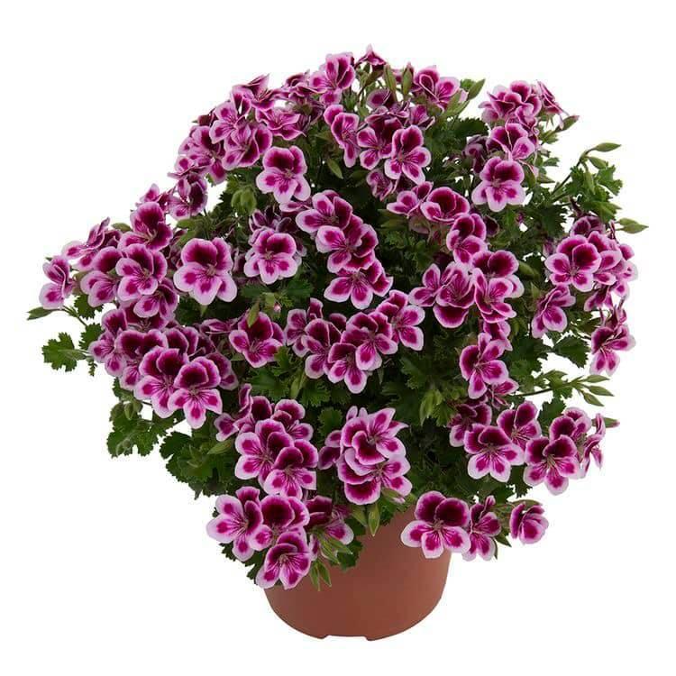 Hoa rực rỡ mê đắm lòng người