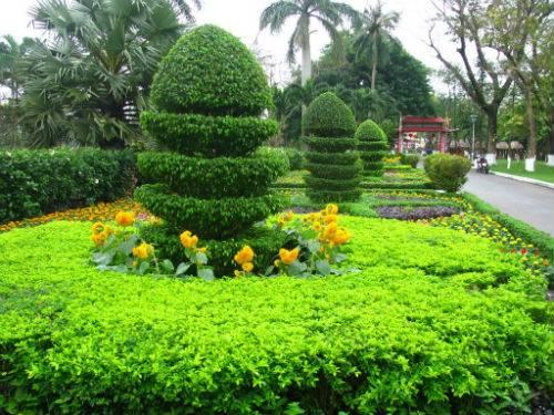 Cây chuỗi ngọc ứng dụng trồng viền trồng thảm